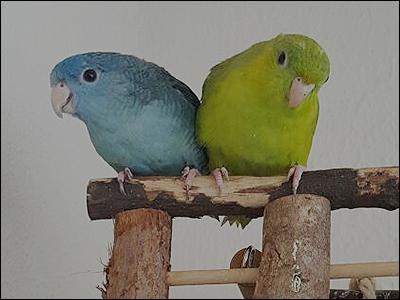 couple tomy lola